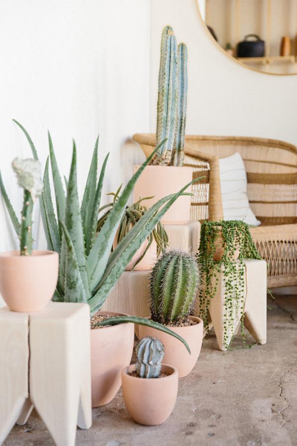 light pink-terra-cotta-planters-cactus