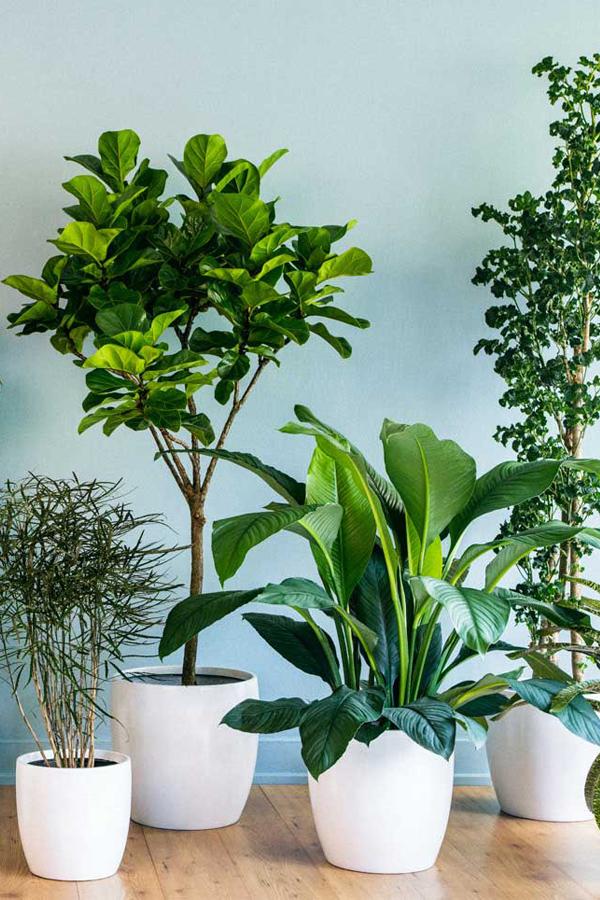 plants-white-planters
