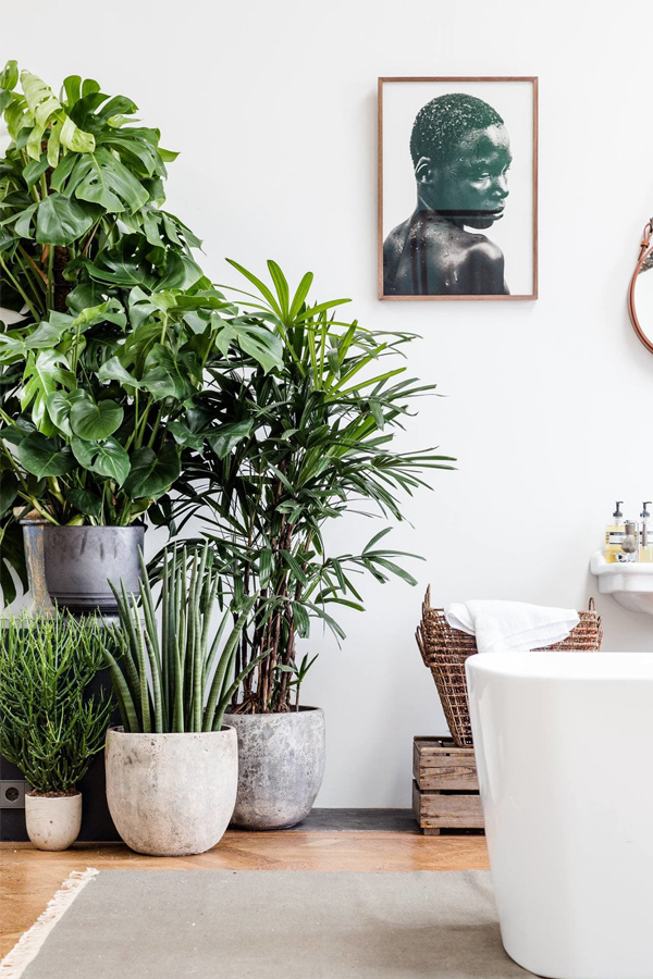 bathroom-with-plants