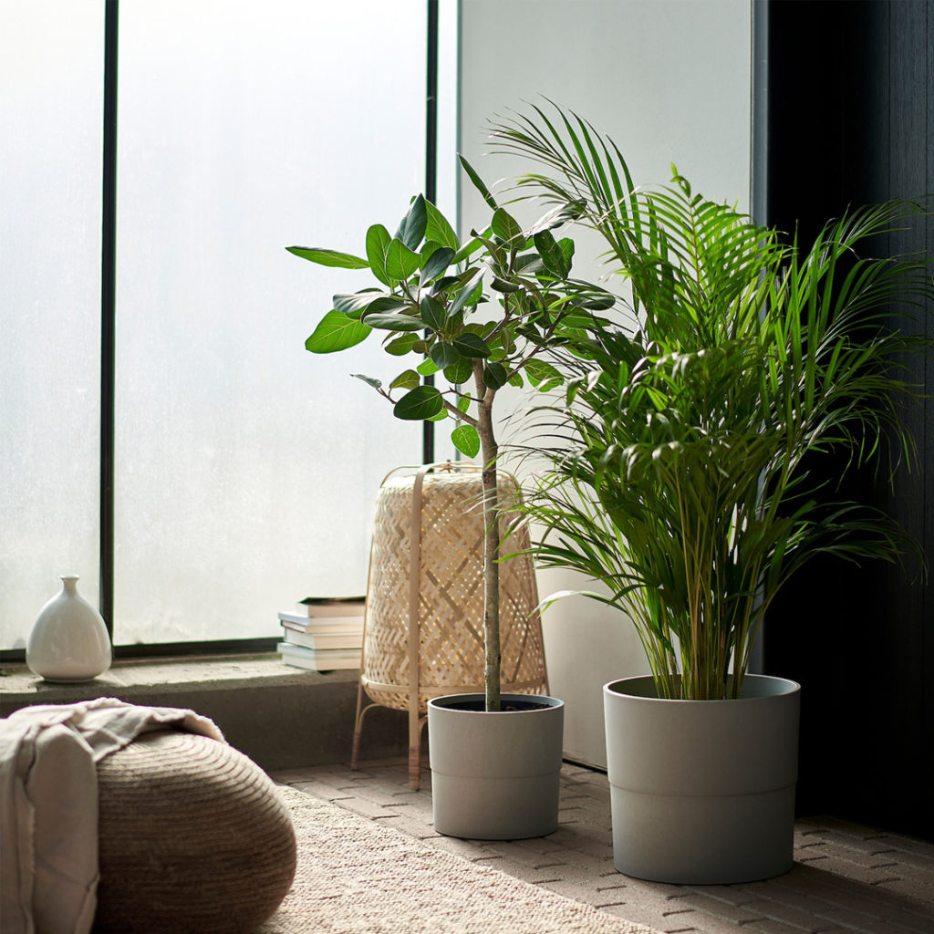 indoor-plants-window-sun
