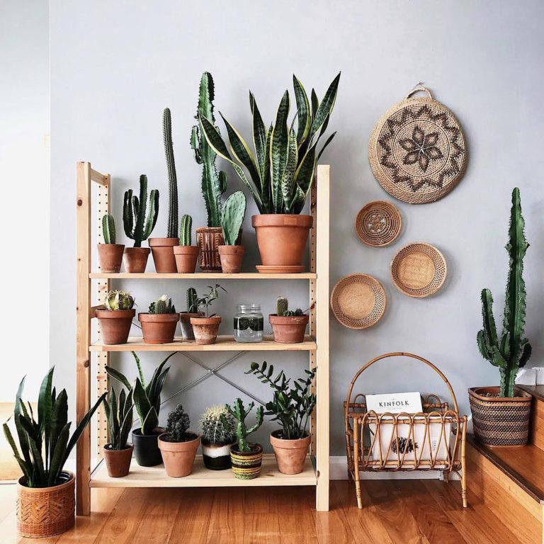 How To Display Indoor Plants Like a Pro – AFFORDABLY!