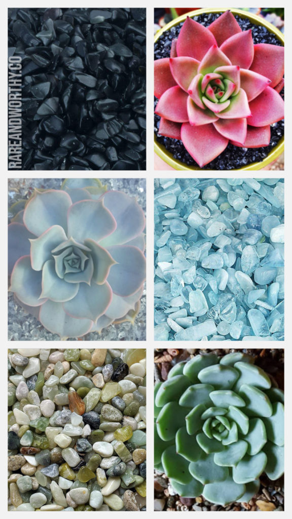succulents-rock-soil-dressing