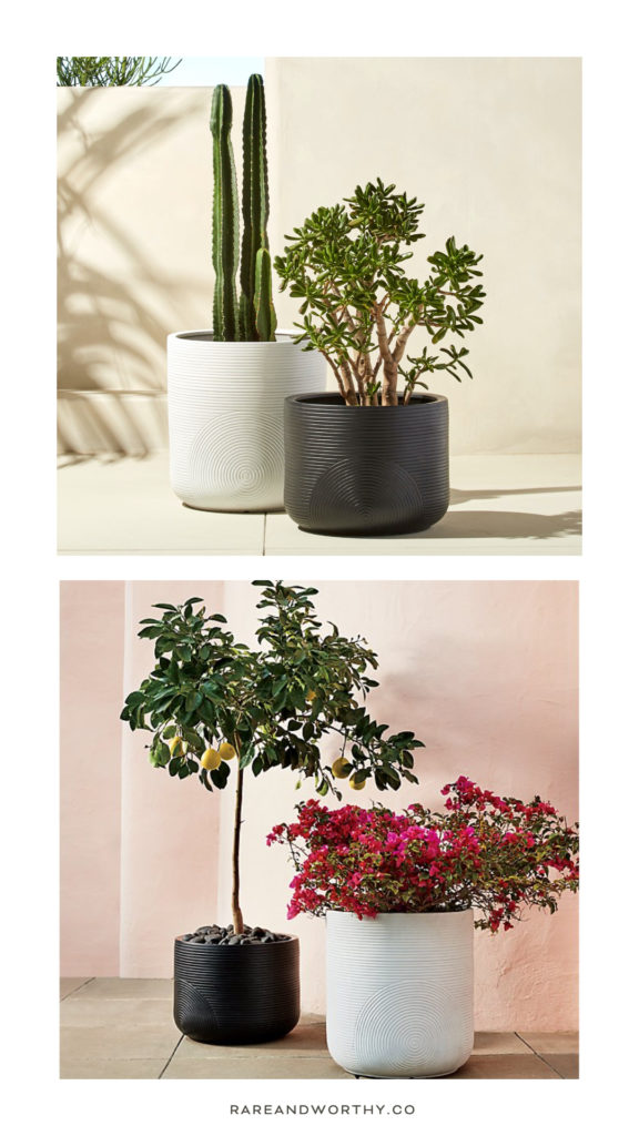 plants-in-large-pots