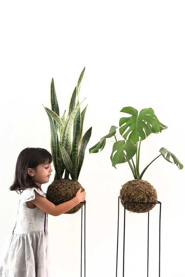 Child with two extra large indoor kokedama snake plant