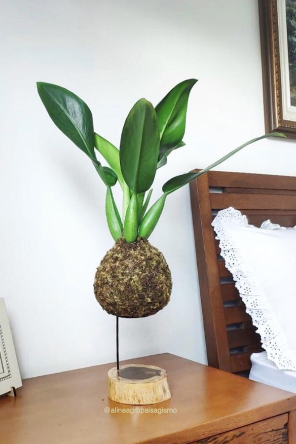 Bedside table with kokedama floating plant display