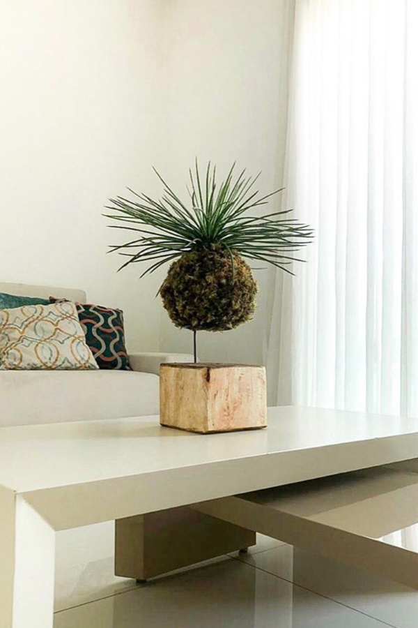 Tabletop wood block kokedama display