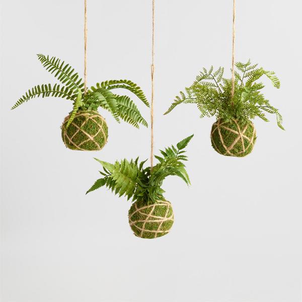 Hanging kokedama fern plants